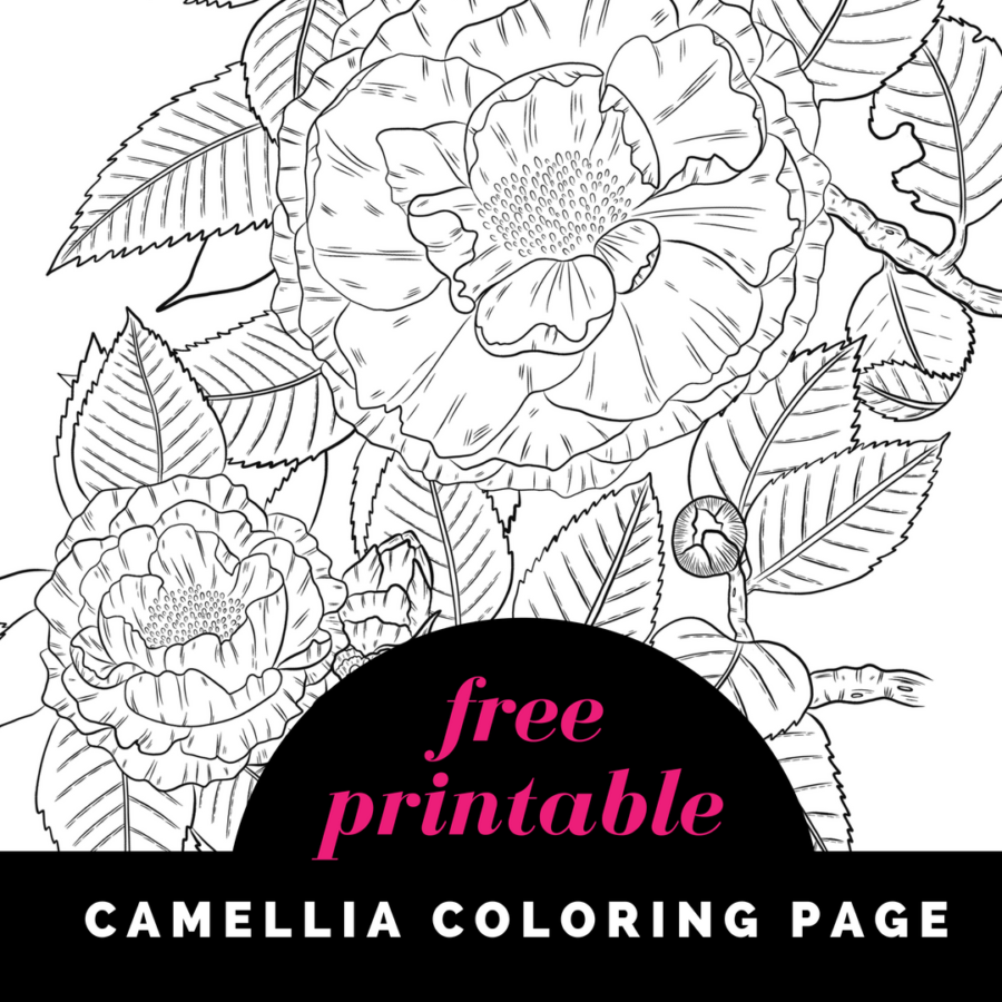 Free Camellia Coloring Page